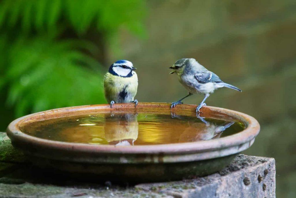 Imagem de dois passarinhos em pia de água